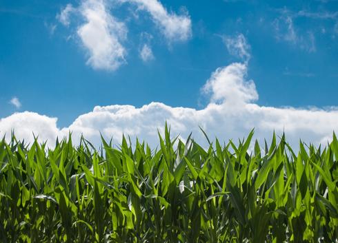经济发展拒绝环境污染 科学仪器助力低碳经济